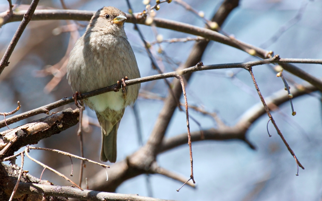 RSPB's Big Garden Birdwatch